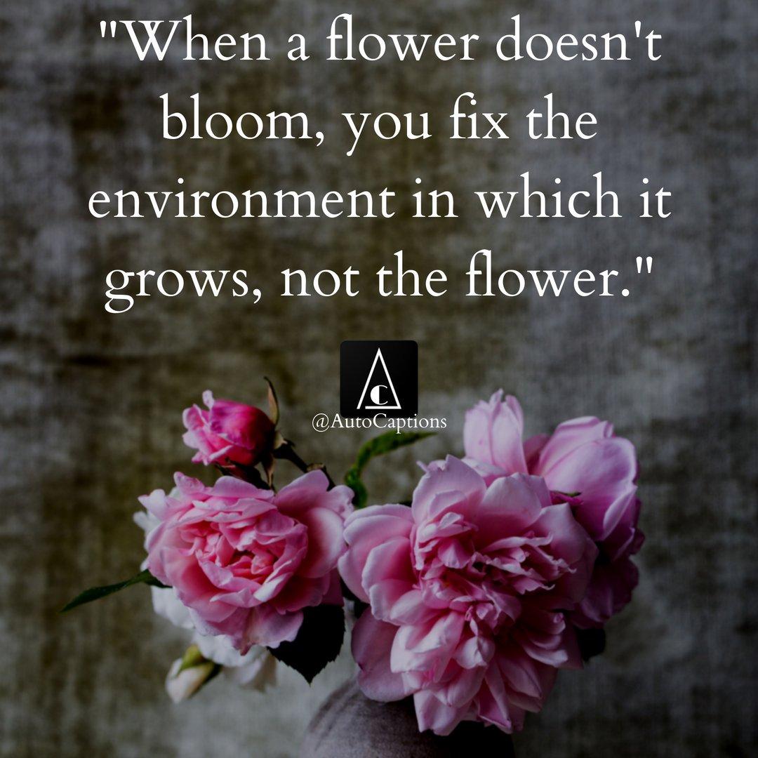 Kada biljka ne cveta popravljaš uslove u kojima biljka raste, ne popravljaš biljku
